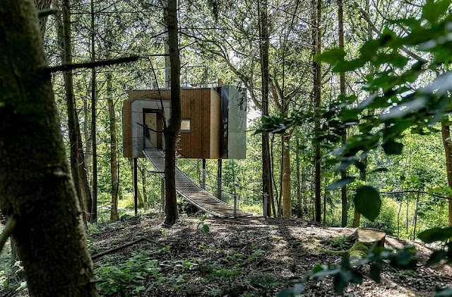 Unique pine trees 'grow through' the house floating in the middle of the forest