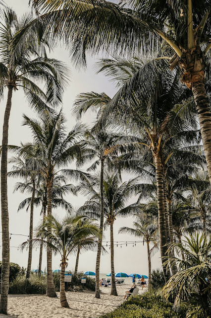 palms on the beach in naples
