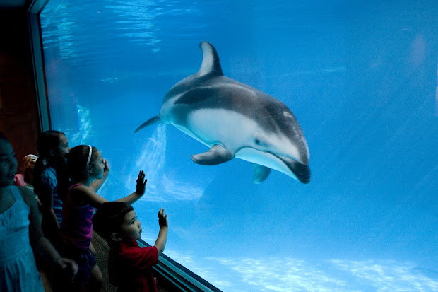 Tourism Shedd Aquarium