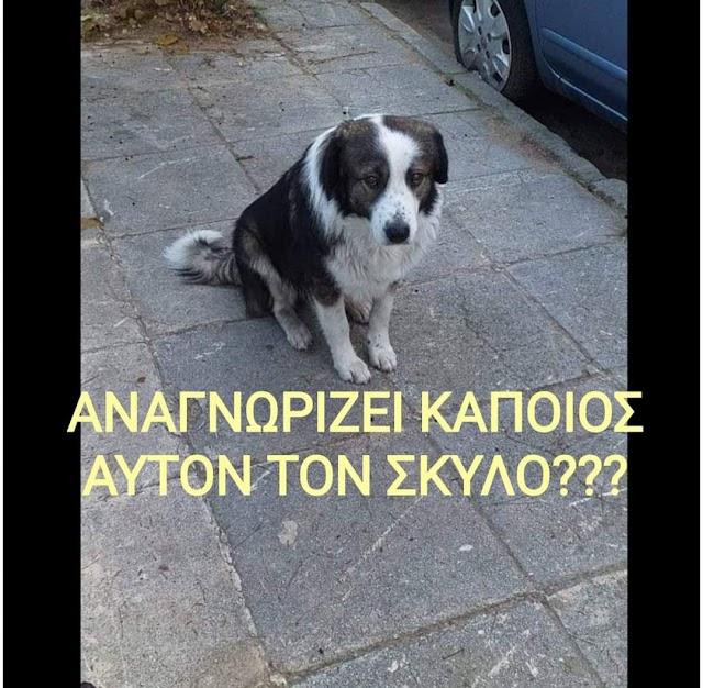 Έκτακτη είδηση για σκυλάκι
