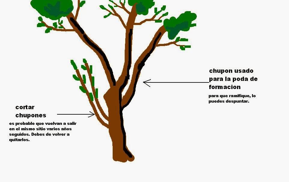 Juanpcachero blog la poda de frutales for Cuales son las partes de un arbol