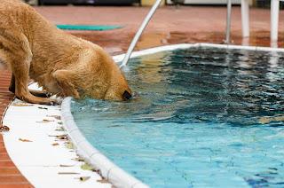 waterhond