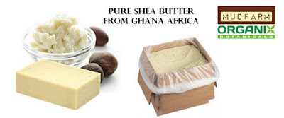 Toronto Yellow/Ivory Shea Butter for Sale in Bulk or Wholesale - Grade A Unrefined