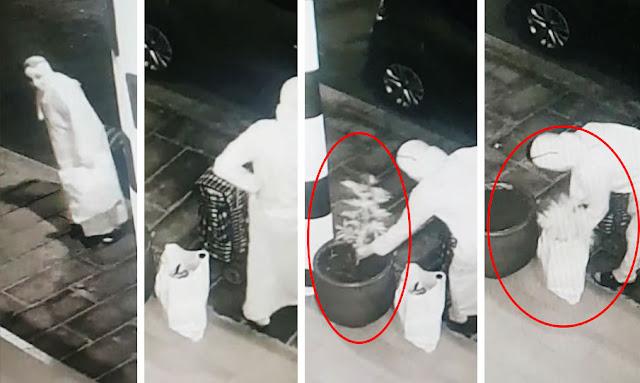 يحدث في تونس : بالفيديو ... مواطنة تونسية محجبة تقوم بسرقة شجرة زينة من امام صيدلية !! تفاصيل
