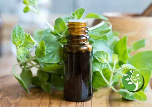 El aceite de orégano mata los patógenos de manera segura y efectiva