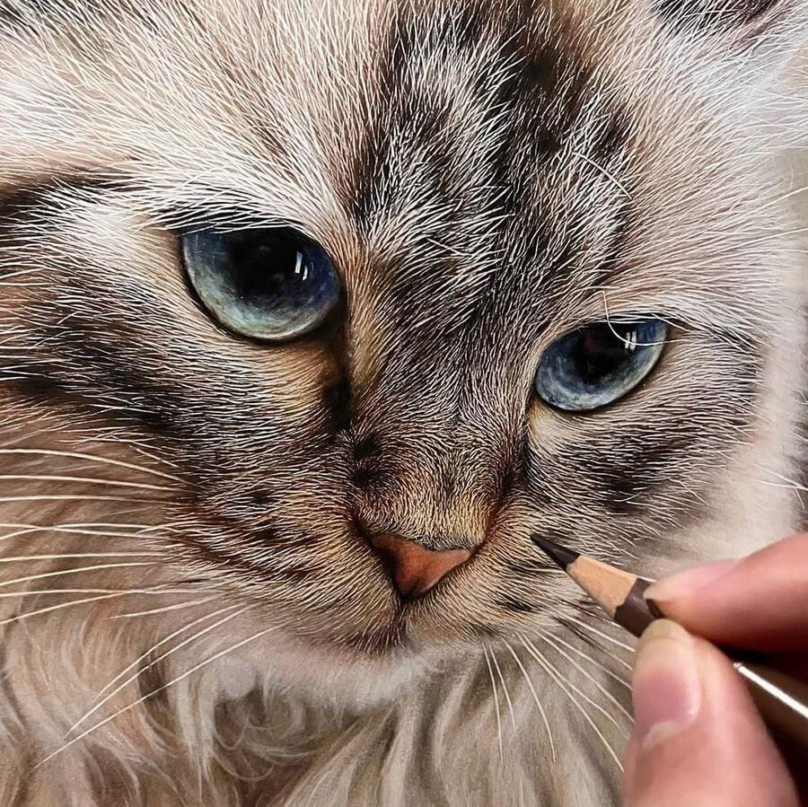 02-Cat-beautiful-fur-detail-Haruki-Kudo-www-designstack-co