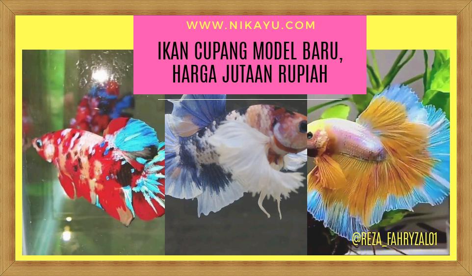 Trik Bisnis Budidaya Ikan Cupang, Raup Omzet Jutaan Rupiah | Usaha