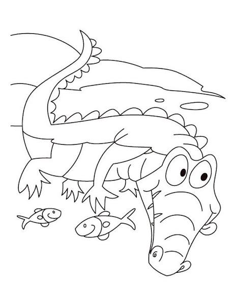 Hình tô màu con cá sấu và con cá