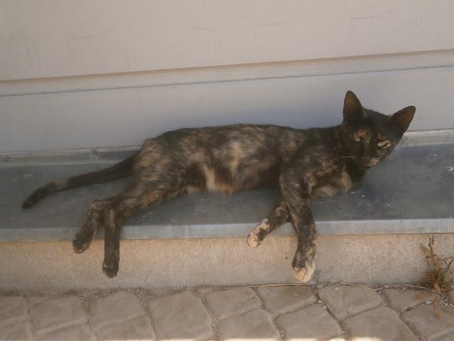těsné kočička vids zdarma černá kočička prstoklad