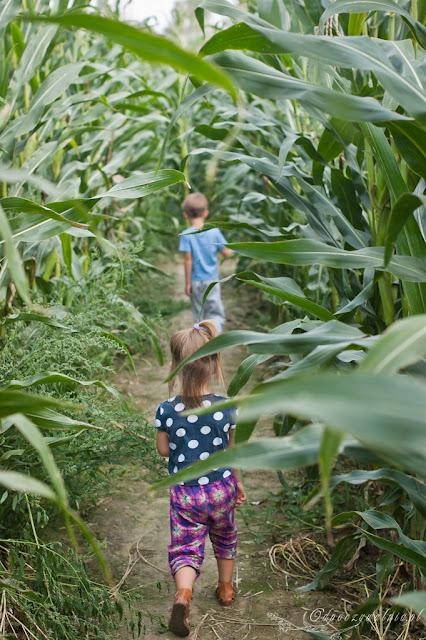 kukurydziany labirynt, wycieczka z dzieckiem