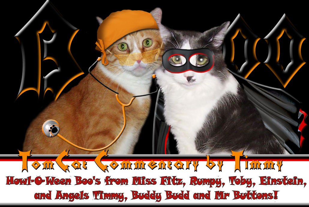 Tomcat Commentary by Tim