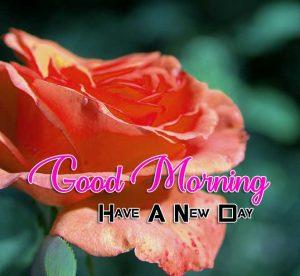 Beautiful Good Morning Rose Images