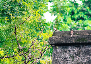 Two sparrows on the edge of an old terrace