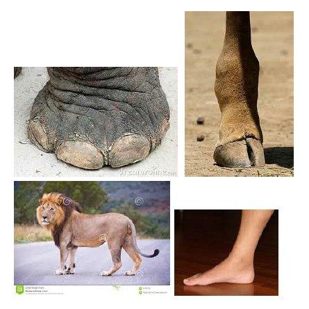 a lábak ízületei fájnak, mit inni)
