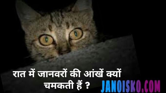 रात में जानवरों की आंखें क्यों चमकती हैं । Why the Eyes of Animals Glow at Night