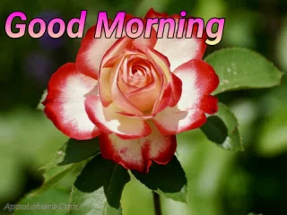 good morning image new hd, good morning image for love download, good morning dp