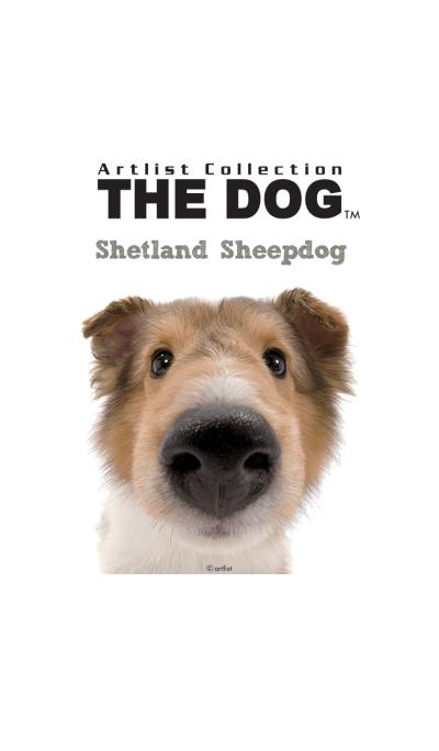 THE DOG Shetland Sheepdog