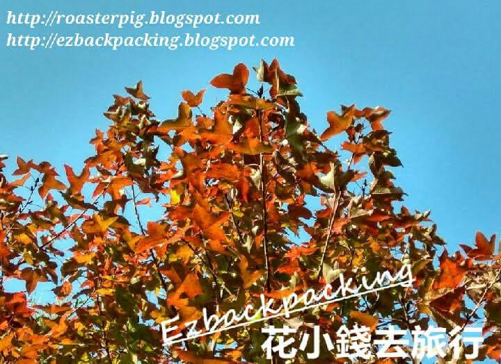 香港行山紅葉