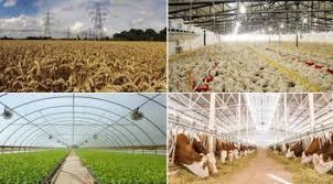 Tarımsal İşletmecilik nedir