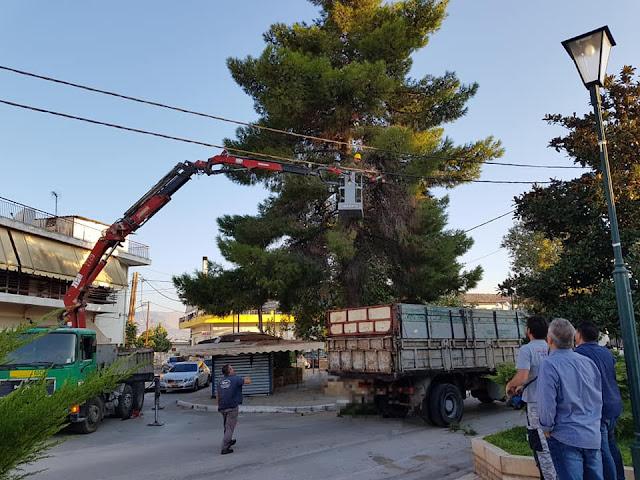 Εργασίες κοπής μεγάλου δέντρου στην Αγία Τριάδα