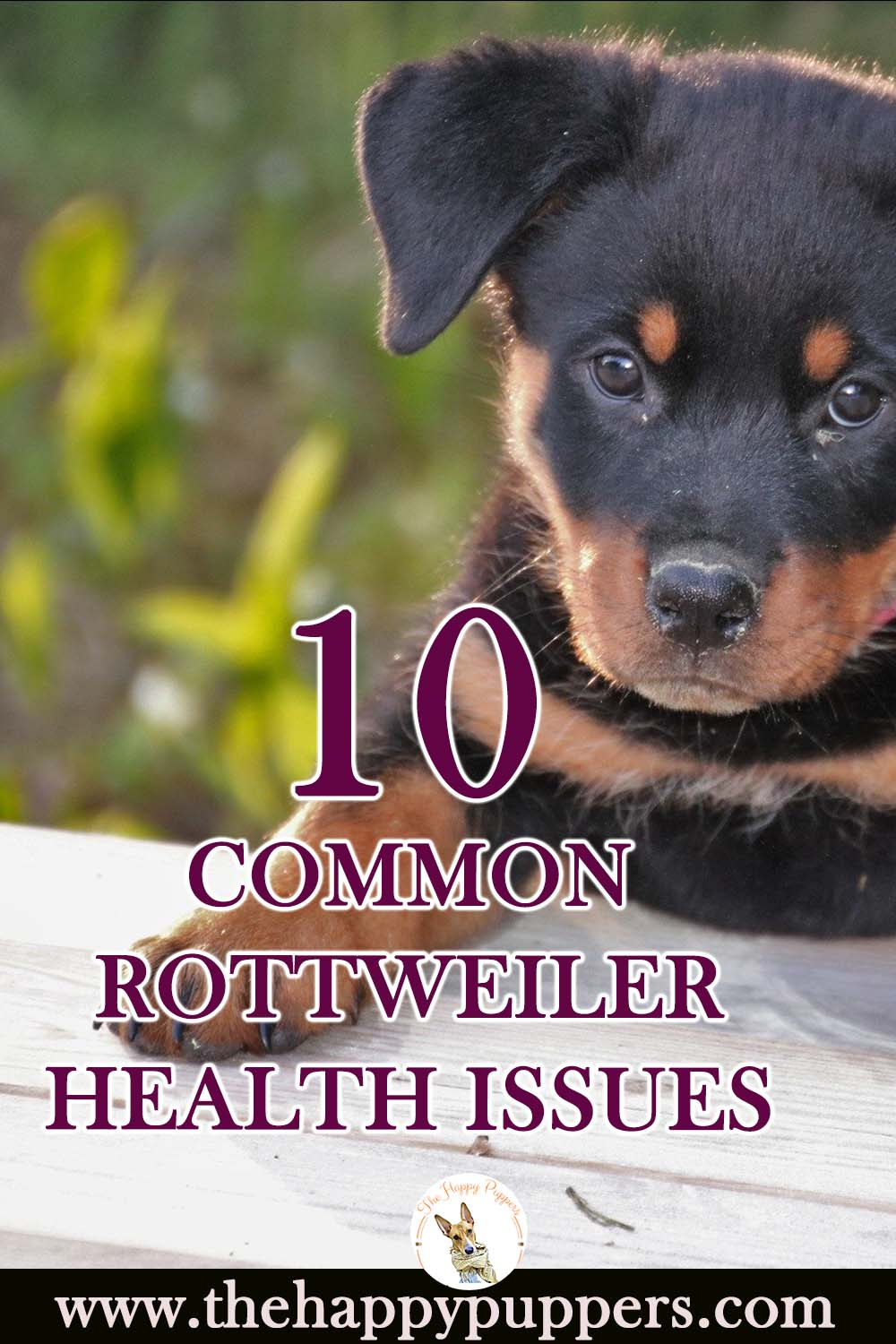Rottweiler health issues