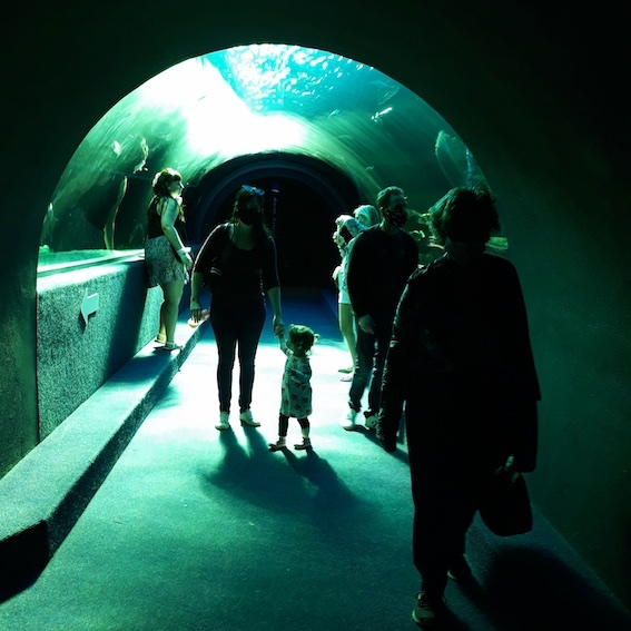 People walking through tunnel tank at the Two Oceans Aquarium, Cape Town