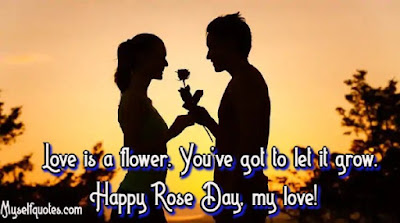 happy valentine's day 2020 wishes, happy rose day wishes, rose day 2020 wishes, happy rose day 2020 images'