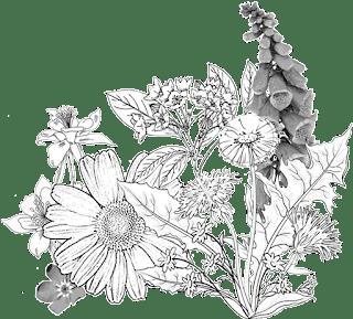 daisy columbine dandelion foxglove, sources unknown