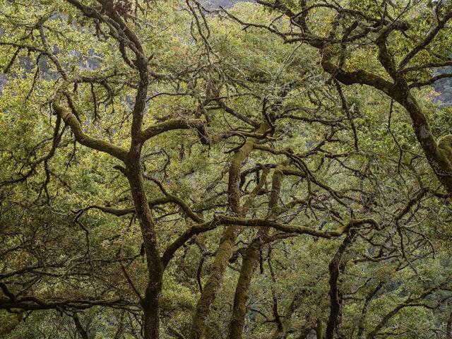 Bosque cubierto de líquenes