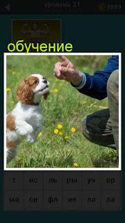 на поляне сидит мужчина и занимается обучением собаки ответ на 21 уровень