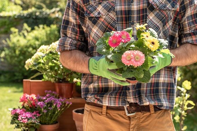A lição do jardineiro