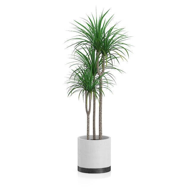 3D model free -  Plants_12