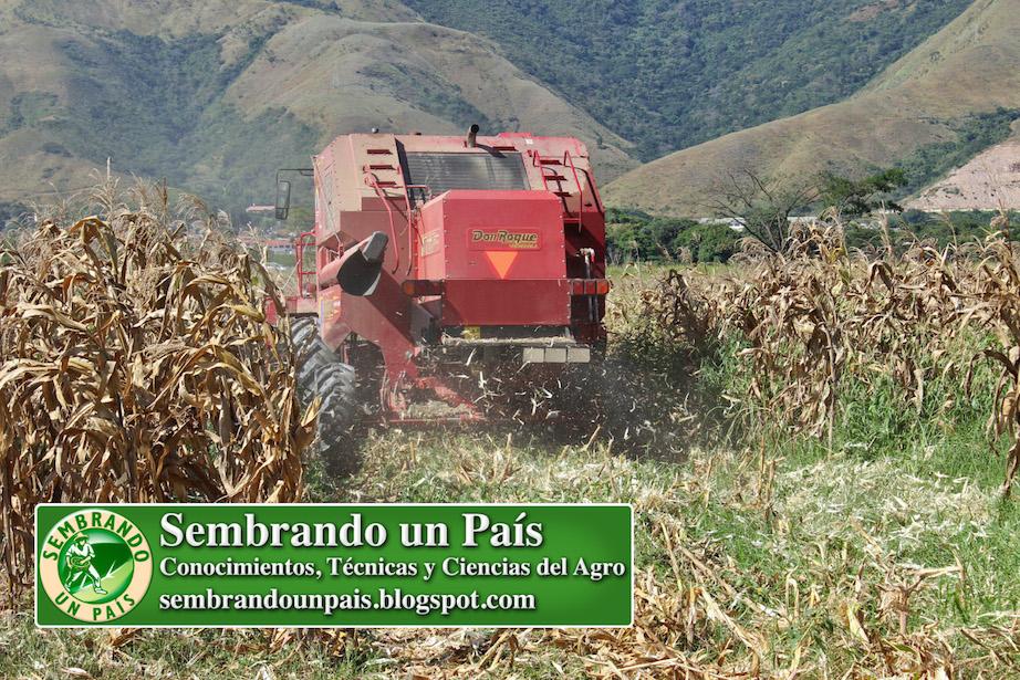cosechadora expulsando tusa de maíz