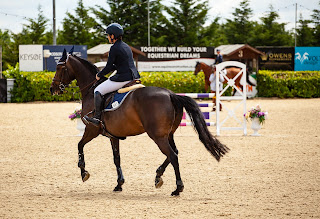 A bay jumping horse trotting around a show jumping competition school