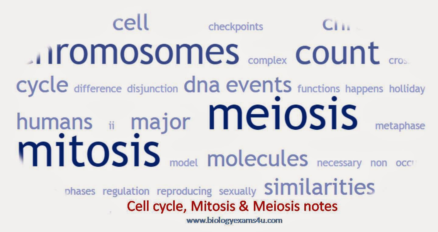 Notes on cell cycle, mitosis and meiosis