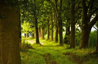 Τα δάση διαδραματίζουν βασικό ρόλο στις ζωές μας