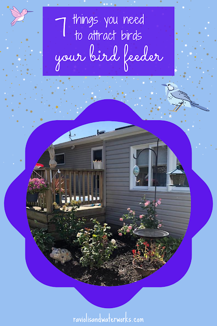 how to attract birds to your backyard; how to attract birds to your feeder; how to make a bird sanctuary