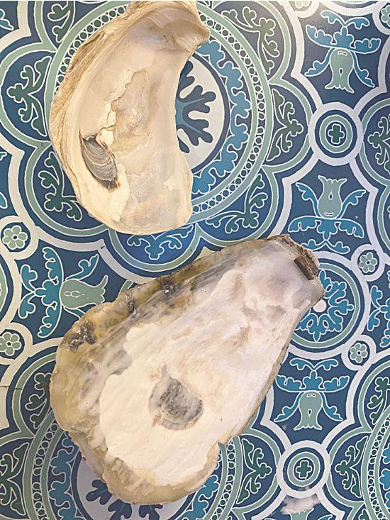 2 oyster shells