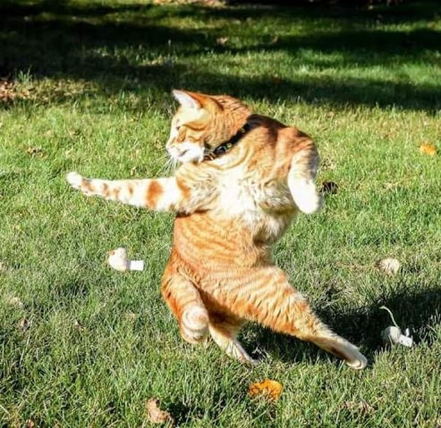 17. Cats dance when we aren't home, that's why they always seem lazy when we're with them. They're just tired.