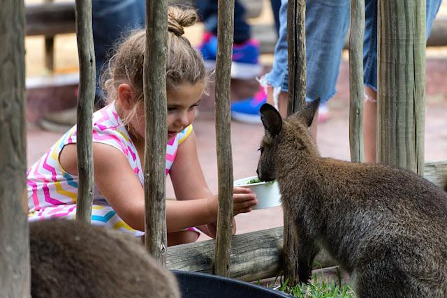 Parque Busch Gardens Tampa - Alimentar animais