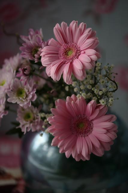 gerbera, pinkki, still life flower