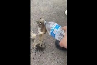 Vídeo viral de la ardilla pidiendo agua-PuroIngenio