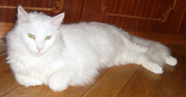 """""""Через неделю, как меня не станет, придет к двери, Маруся, белый кот. Впусти его, он счастье принесет"""", - наказал Иван."""