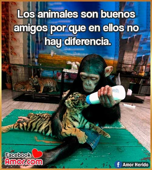 frases bonitas sobre animales
