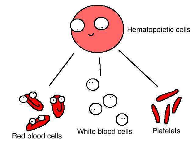 Chemosabe Socks: What The Heck Is A Bone Marrow Transplant ...