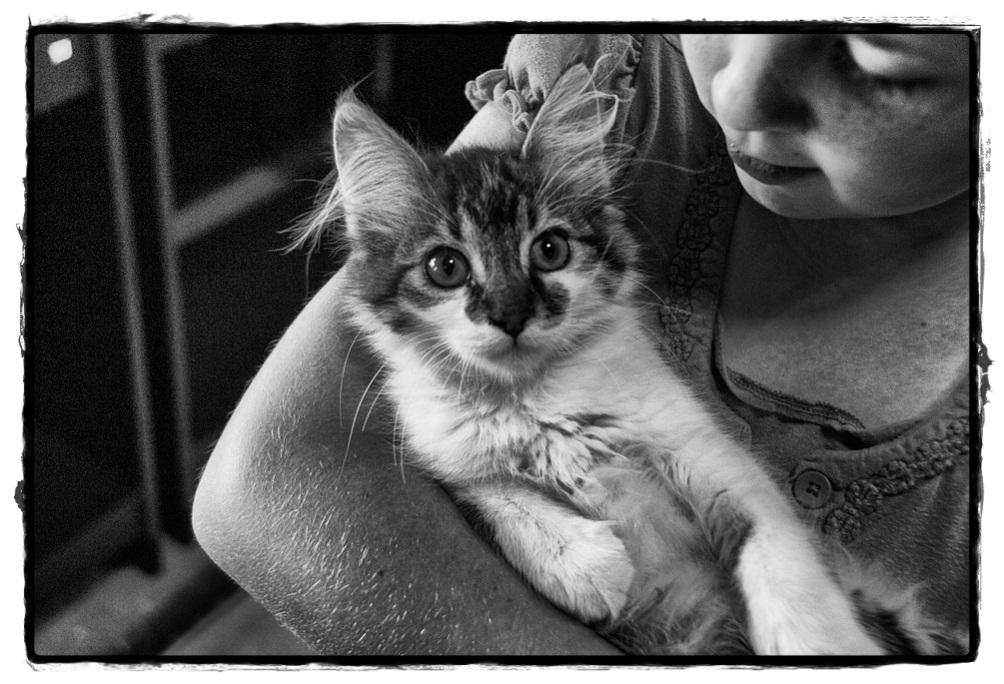 Benarkah Kucing Menyebabkan Mandul, Lihat Penjelasannya