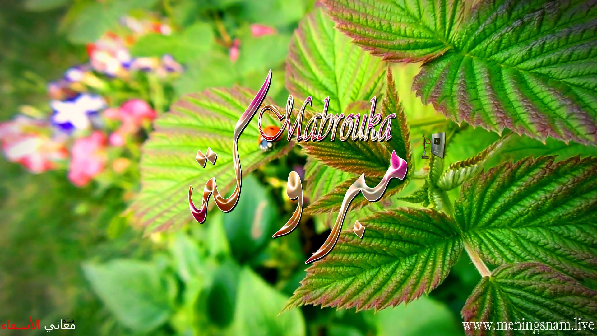 معنى اسم مبروكة وصفات حاملة هذا الاسم Mabrouka