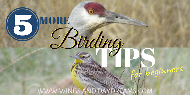 Wings and Daydreams northern California birding photography blog