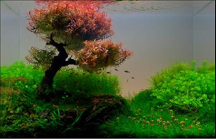Những hồ thủy sinh bon sai dùng vẩy ốc đỏ