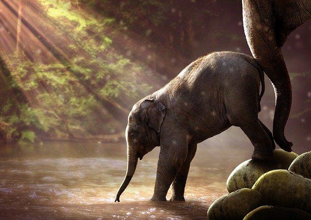 Communiqué : « Disparition des éléphants d'Afrique et d'Asie : le collectif Belaud-Argos s'engage contre le braconnage ! »